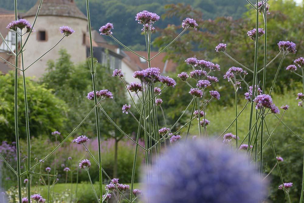Garten Kölsch